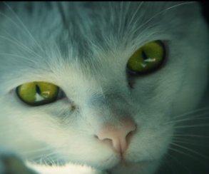 Котик почти выдает снайпера в«живом» трейлере Ghost Recon: Wildlands