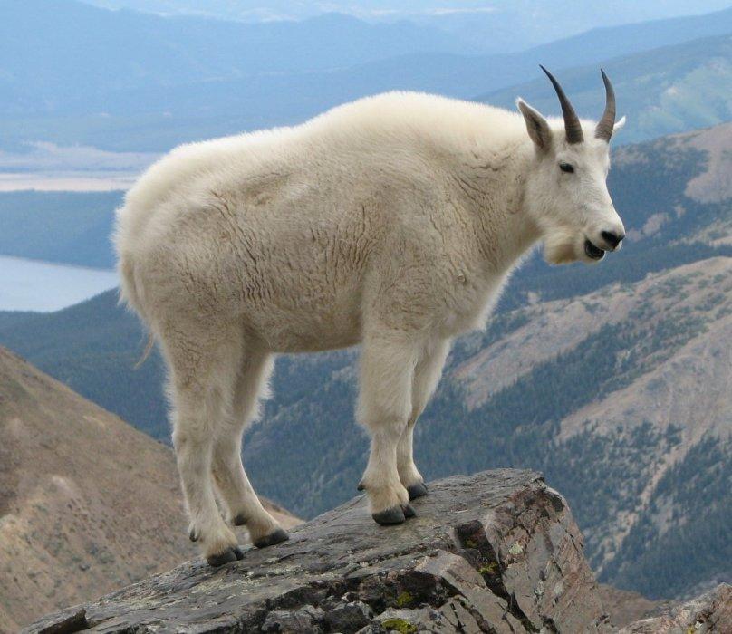 Рецензия на Goat Simulator. Обзор игры - Изображение 1