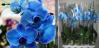 Спасение орхидейки - Изображение 40