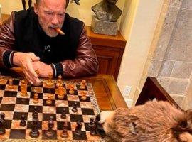 Шварценеггер играет вшахматы сослом. Милее самоизоляцию представить трудно