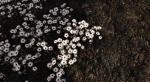 Этот мод для Skyrim сделает растительность по-настоящему реалистичной. - Изображение 12