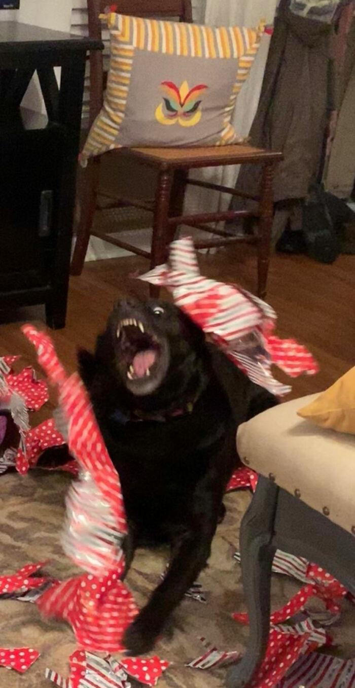 Галерея дурацких рождественских фотографий, которые испортили собаки | Канобу - Изображение 5917