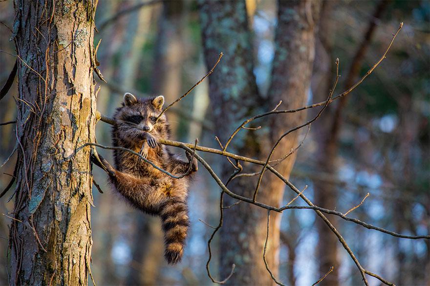 Позитивная галерея: 40 фото сконкурса насамый смешной снимок дикой природы   Канобу - Изображение 3989