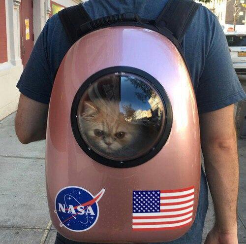 Ненависть, грусть, безысходность и коты. Вспоминаем самые забавные фотографии ко дню кошек!. - Изображение 14