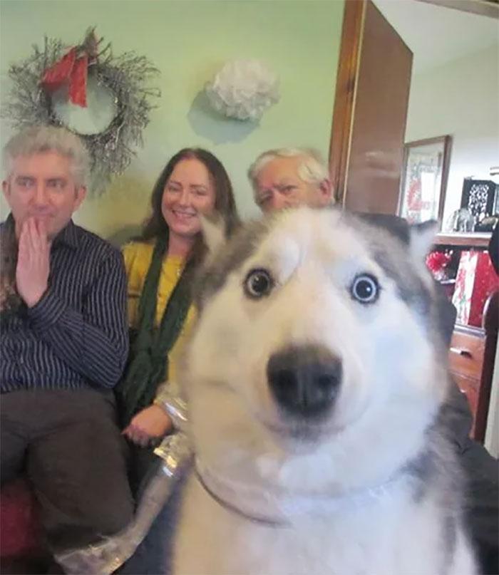 Галерея дурацких рождественских фотографий, которые испортили собаки | Канобу - Изображение 5906